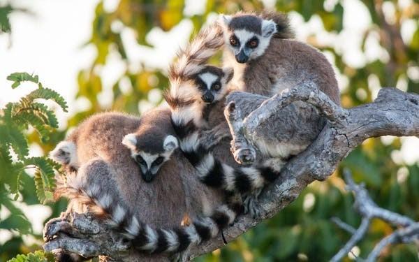 ویروس کرونا تهدید یا فرصتی برای حیات وحش