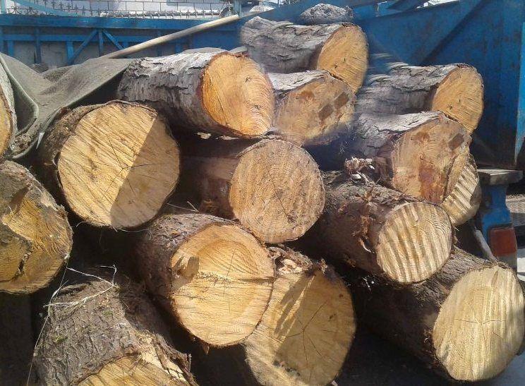 خبرنگاران کامیون حامل چوب قاچاق در سقز متوقف شد