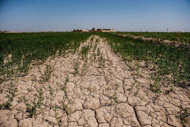 سرعت پیشروی خندق و گالی ناشی از فرسایش خاک در دشتیاری پیشی گرفت