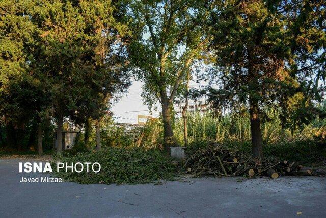 متن و حواشی قطع درختان دانشگاه علوم پزشکی مازندران