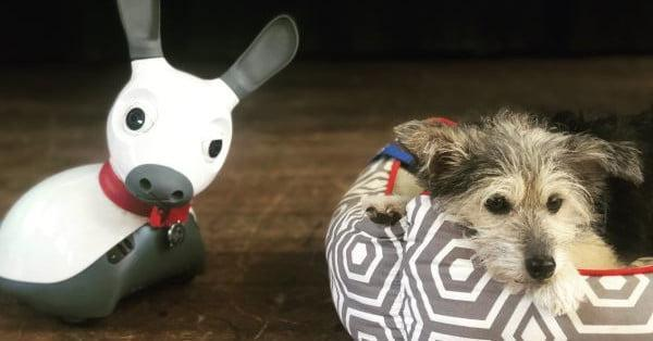 کاهش استرس در بچه ها با سگ های روباتیک