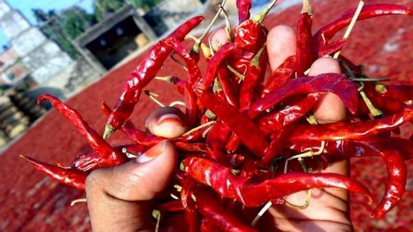 خواص فلفل قرمز (چیلی) برای سلامت، زیبایی و درمان بیماری ها