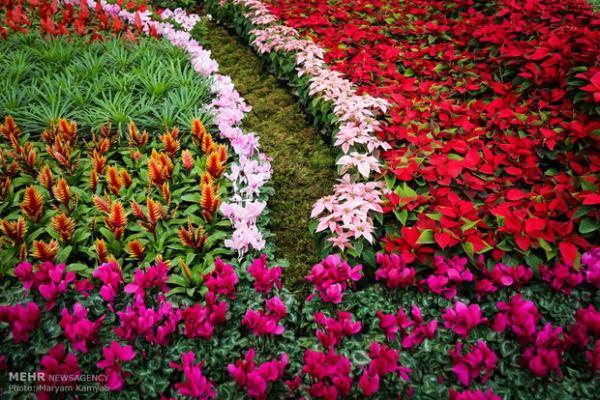 غنای بالای ذخایر ژنتیکی گل و گیاهان بومی ایران