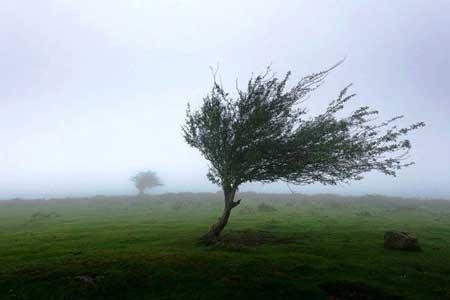 وزش باد شدید در مرکز پیش بینی می گردد