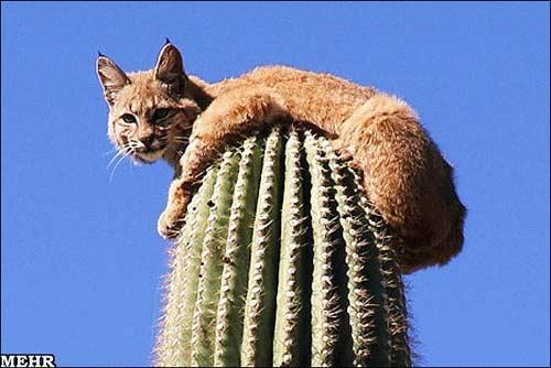 تصاویری عجیب از ترس یک گربه وحشی