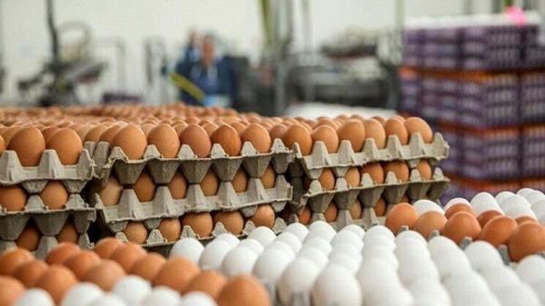 با متخلفان عرضه تخم مرغ در سمنان برخورد جدی می گردد